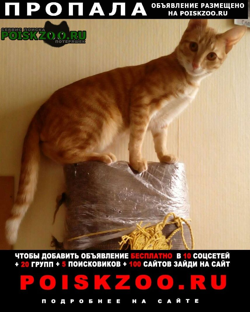Пропал кот рыжий с серой шлейкой без поводка Москва