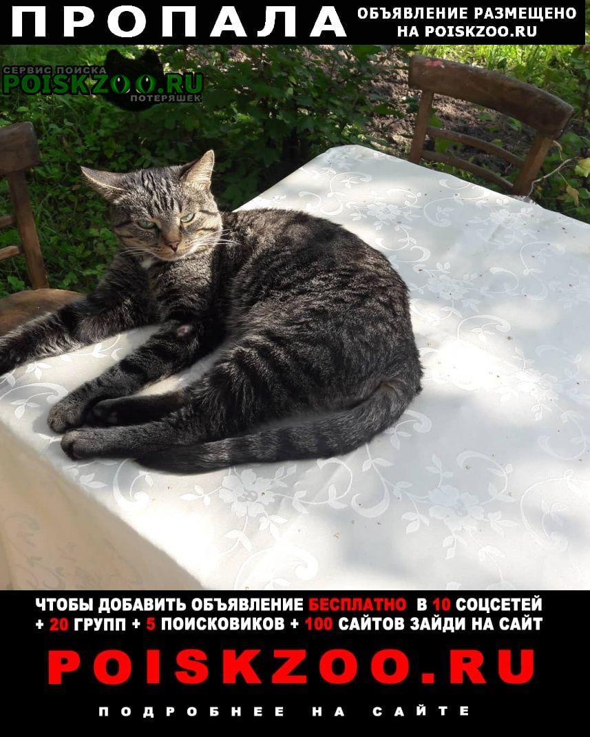 Пропал кот барсик Тула