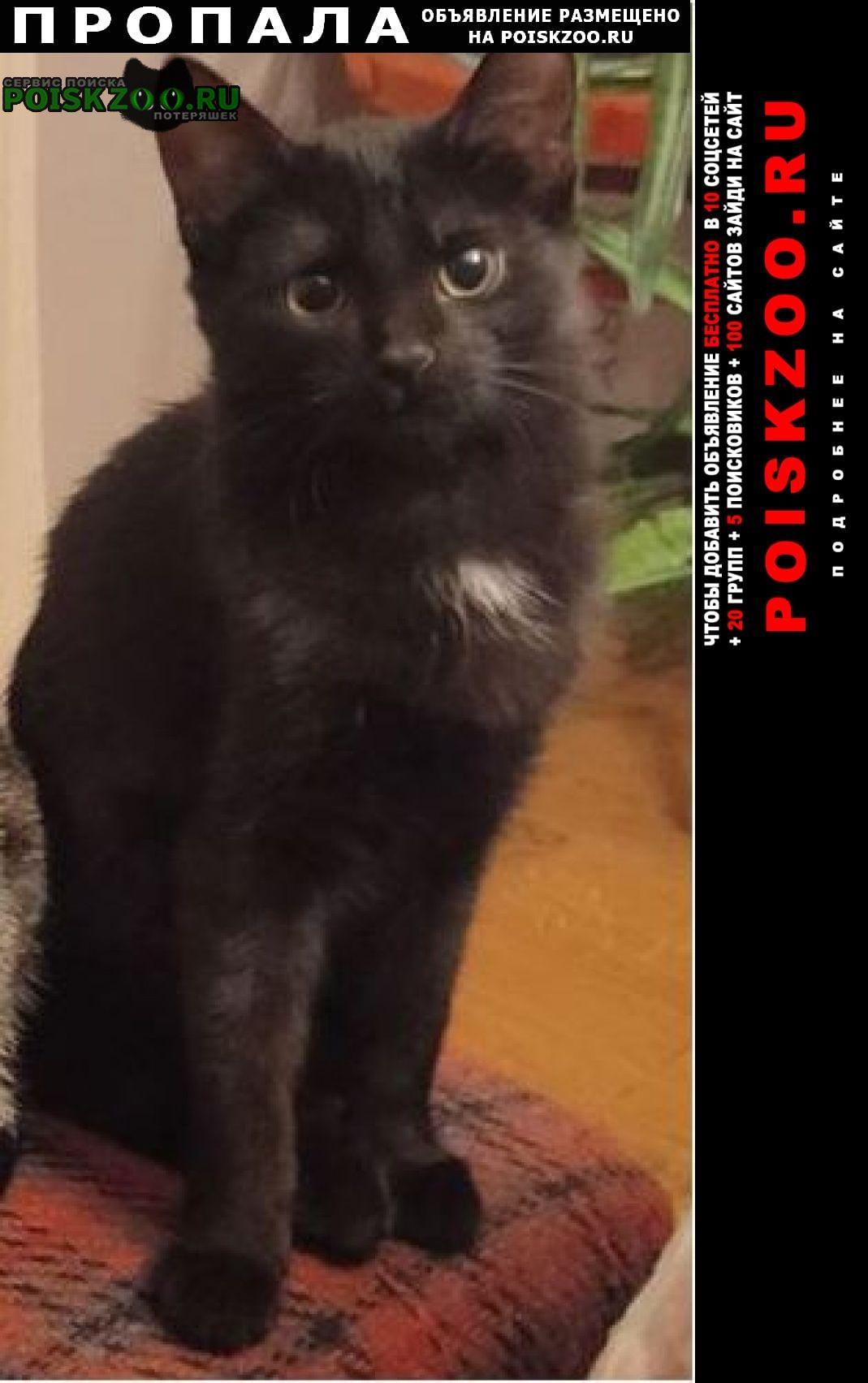 Пропала кошка 30 мая Красногорск