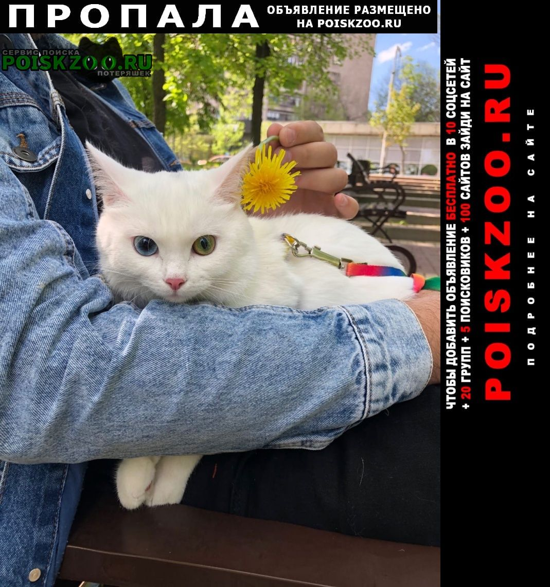 Пропала кошка Верхняя Хава