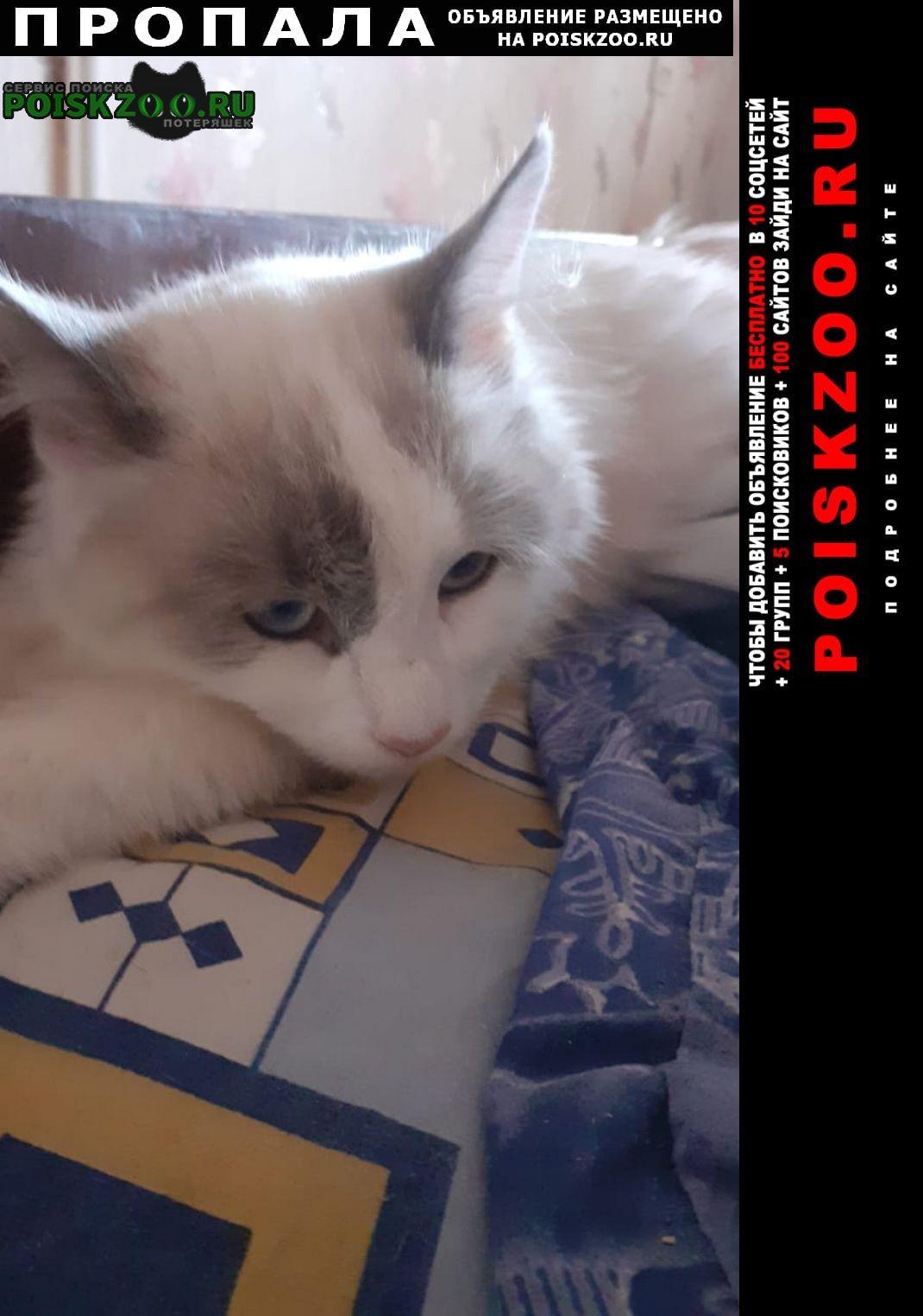 Пропала кошка на зубковой 18 Рязань