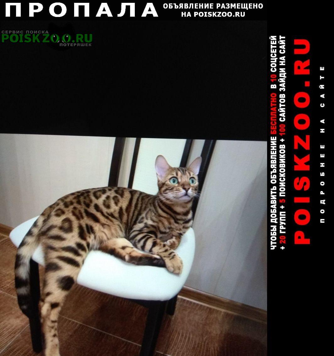 Пропал кот бенгальской породы Сургут