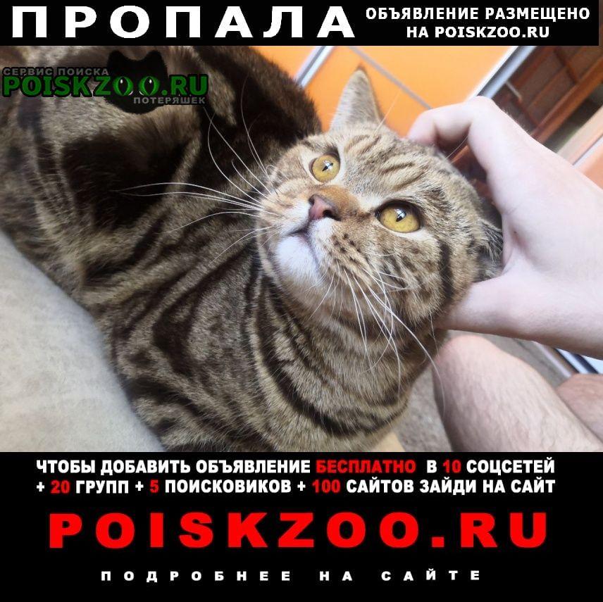Пропал кот Омск