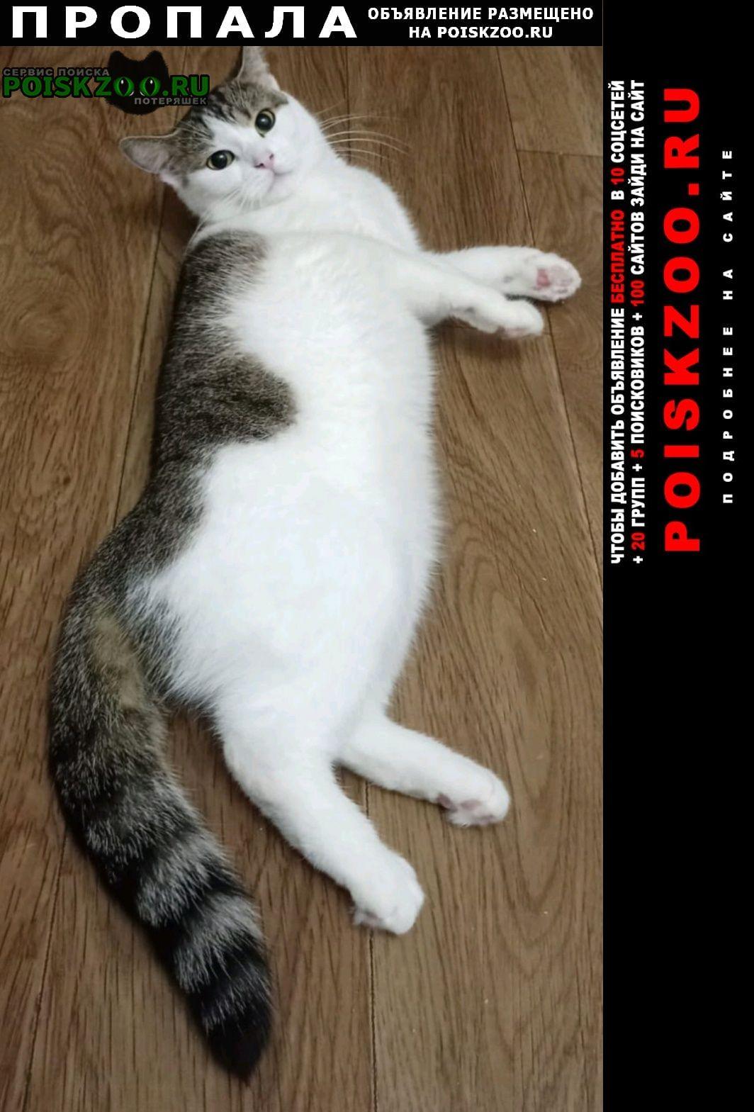 Пропала кошка кнопочка-кнопа- Псков