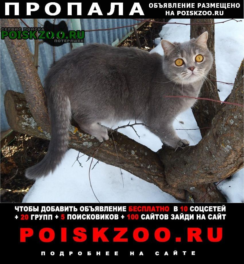 Пропала кошка Бугульма
