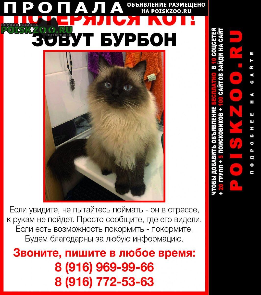 Пропал кот в деревне островцы ул подмосковна Октябрьский (Московская обл.)