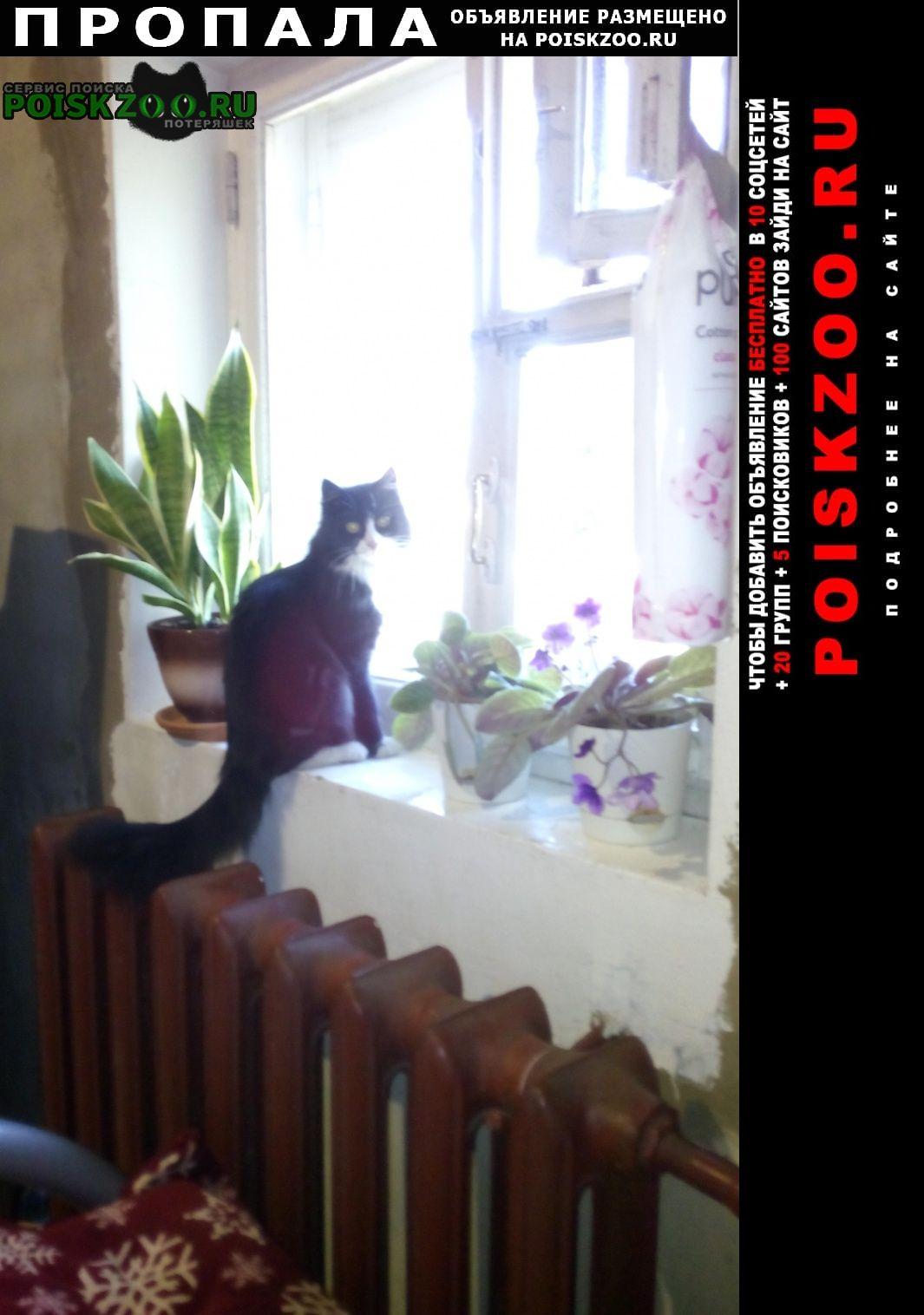 Пропала кошка Тверь