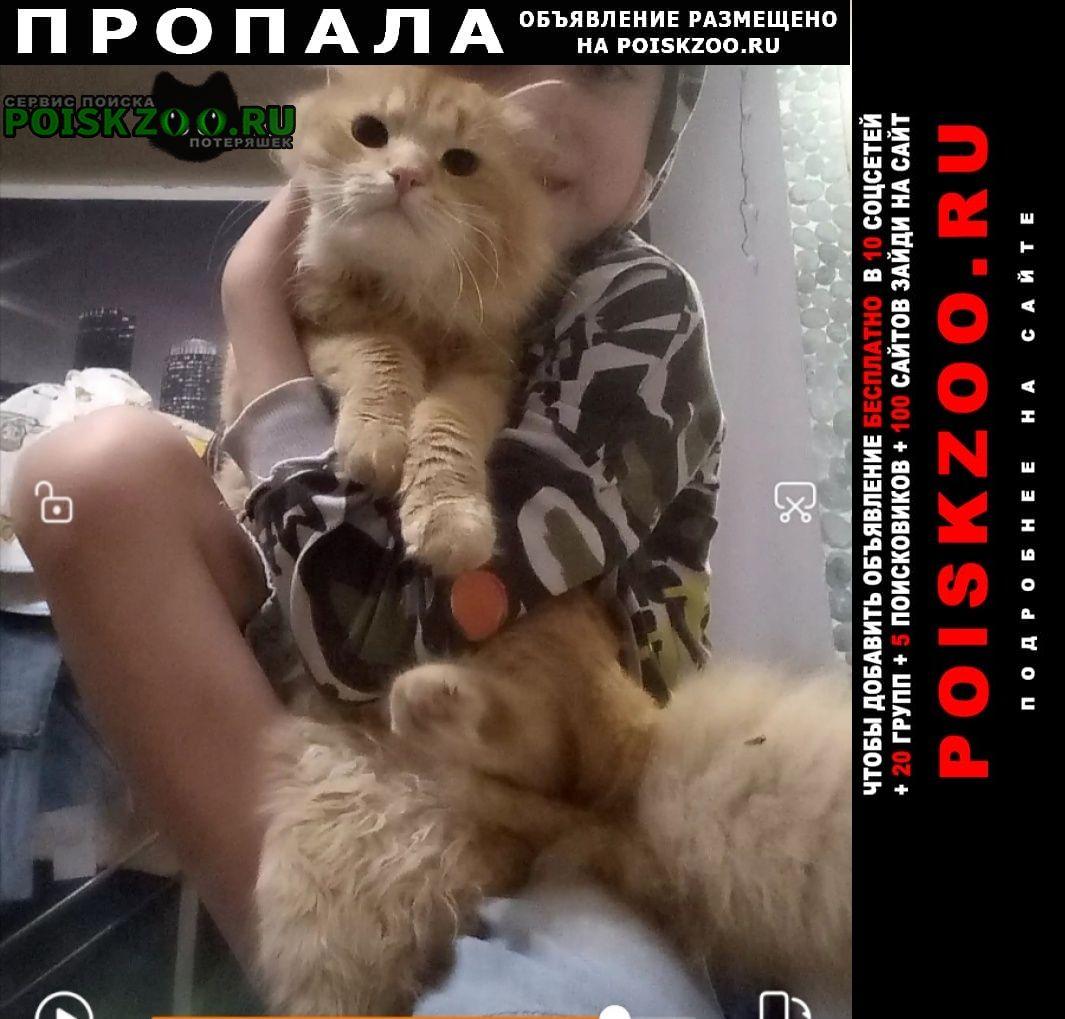 Пропал кот рыжий Иваново