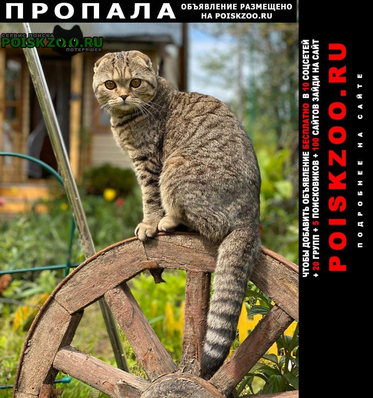 Пропала кошка Дорохово