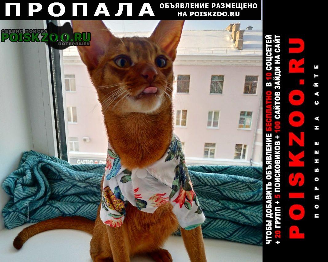 Пропал кот в центре рыжий абис Омск