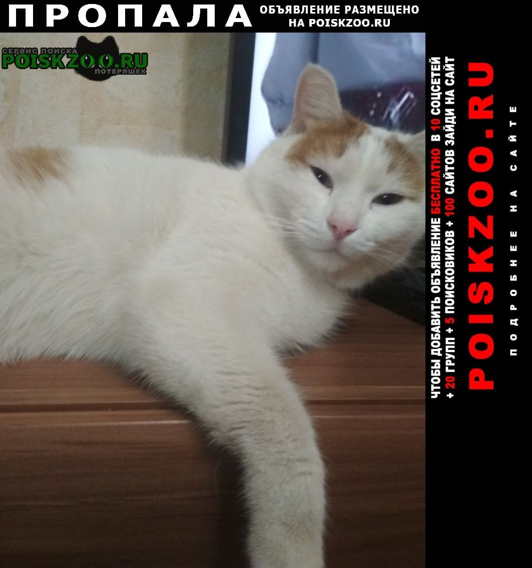 Пропал кот рыжий с белым в белом ошейник Балаково
