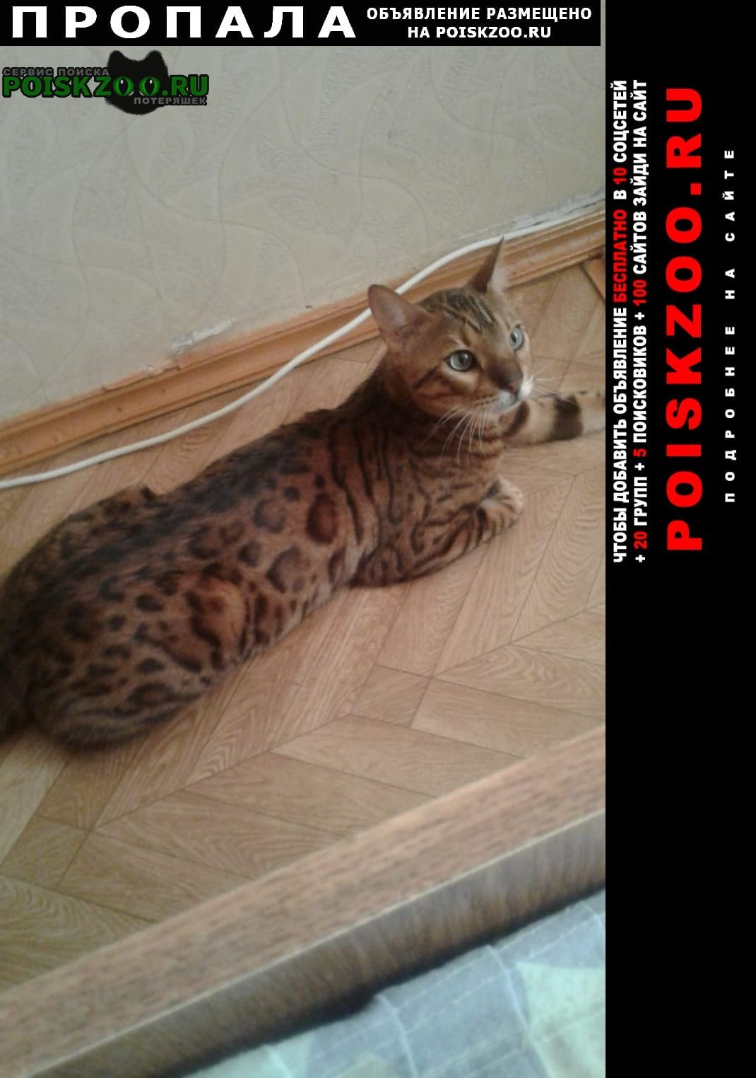 Альметьевск Пропал кот бенгалькой породы