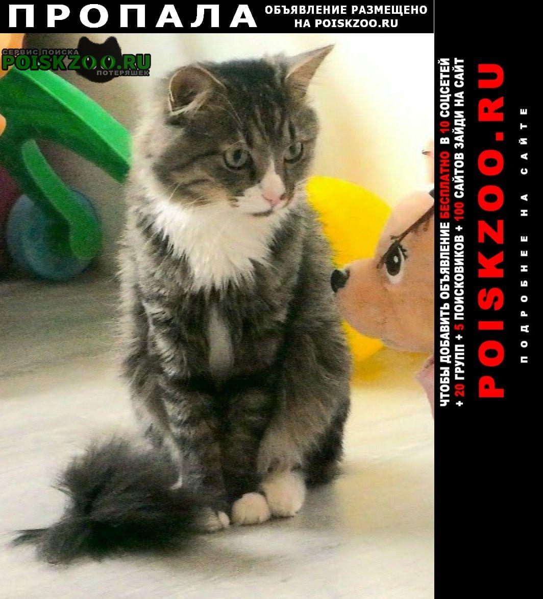 Пропал кот юзао Москва