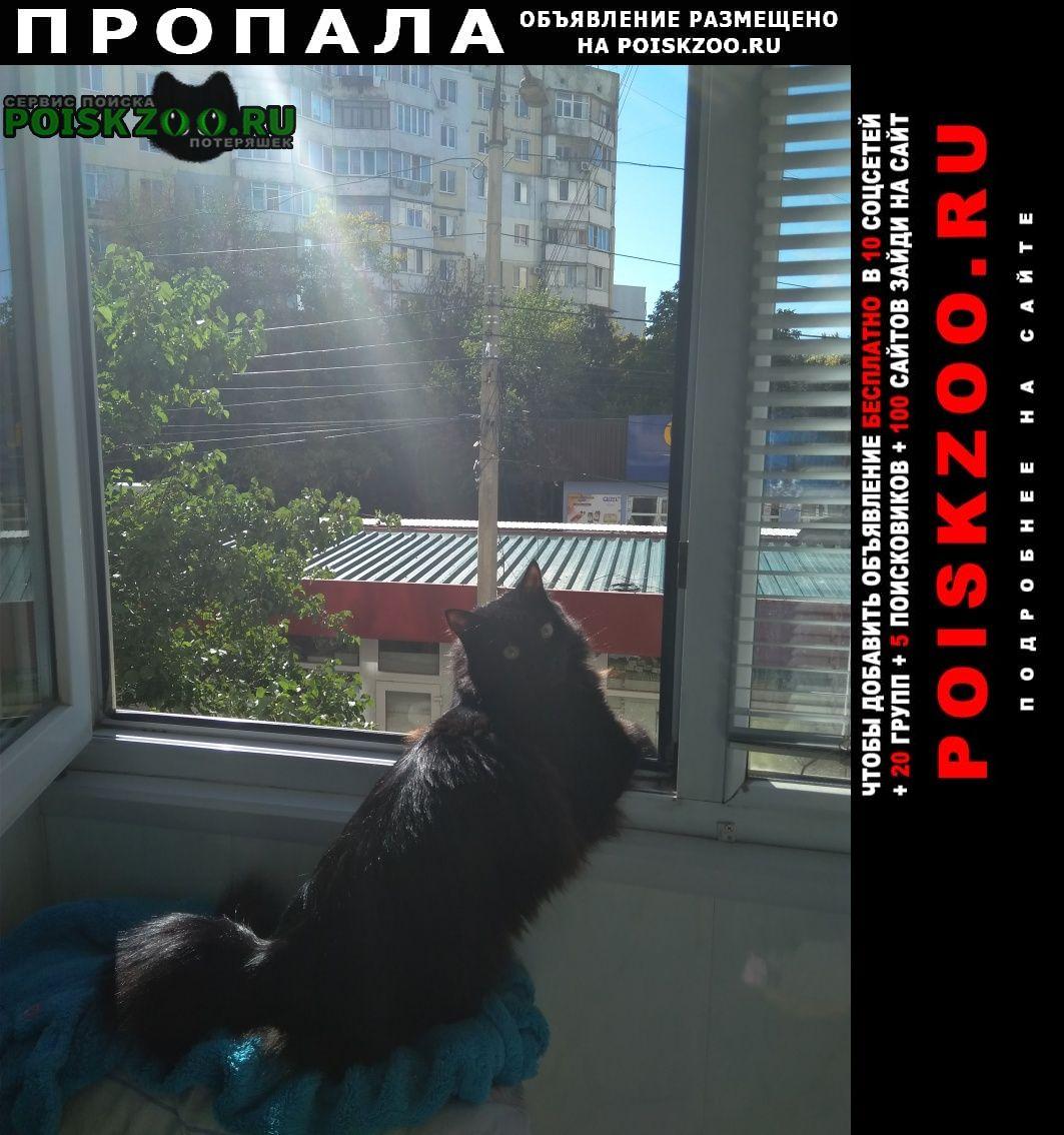 Пропал кот черный Симферополь