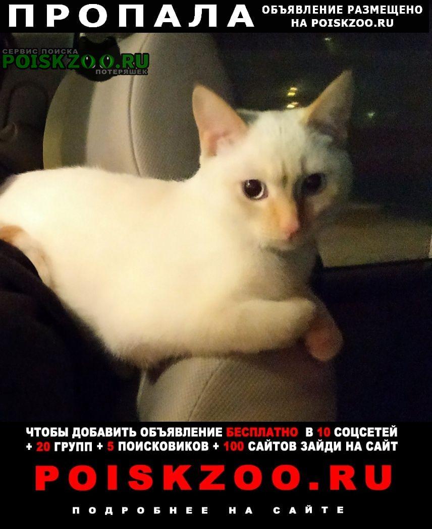 Пропала кошка потерялась домашняя кошечка Пушкин