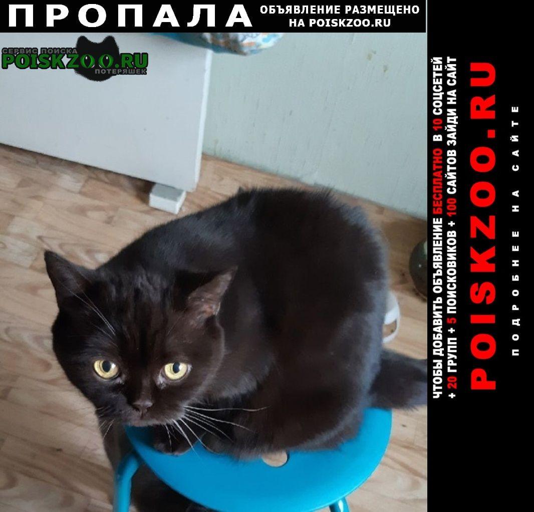 Пропала кошка братанец Красноярск