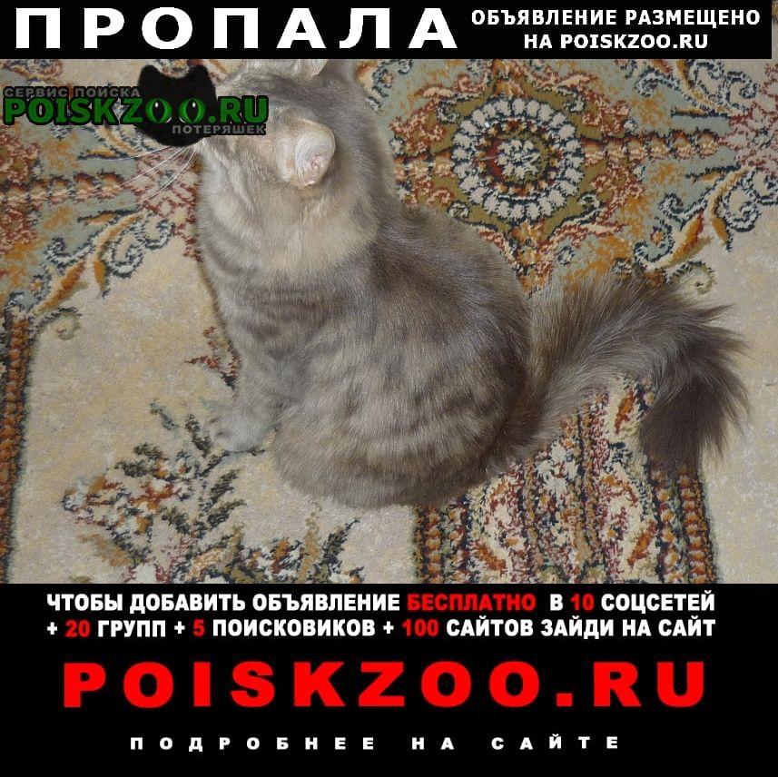 Пропала кошка потерялась на трассе пермь- Кунгур