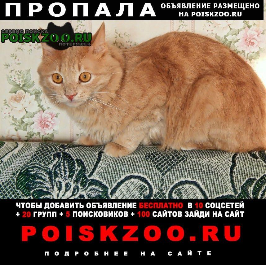Пропал кот Пермь