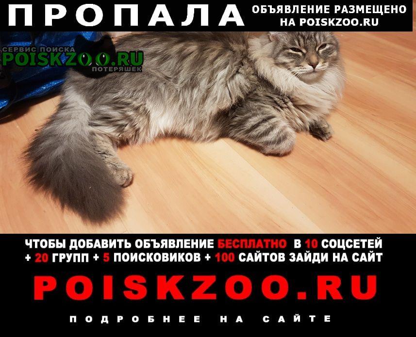 Пропал котик 9 мес Москва