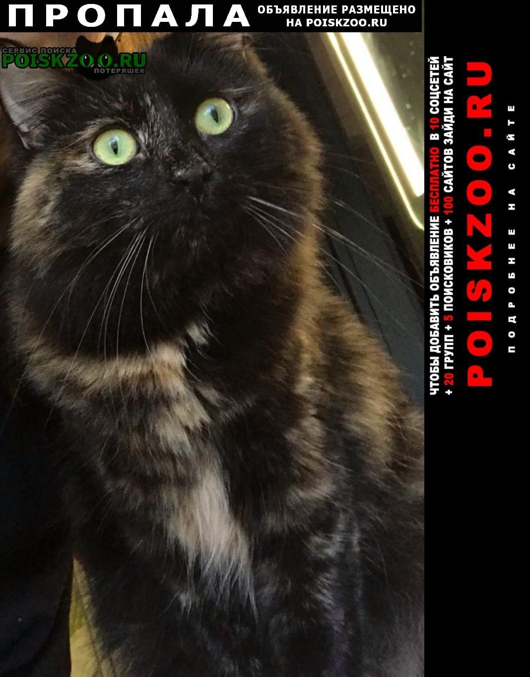 Пропала кошка за вознаграждение Москва