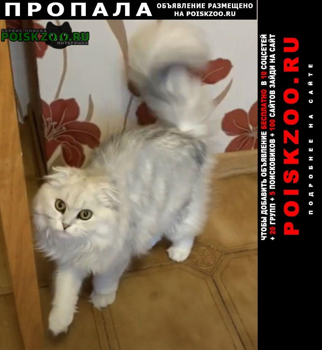 Пропала кошка белая с серым оттенком. вислоухая. Видное