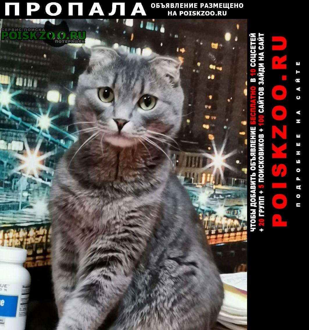 Пропал кот серый вислоухий Омск