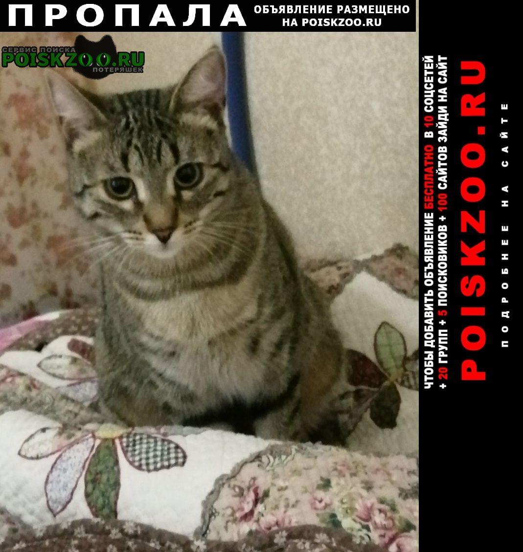 Пропала кошка полосатая Москва