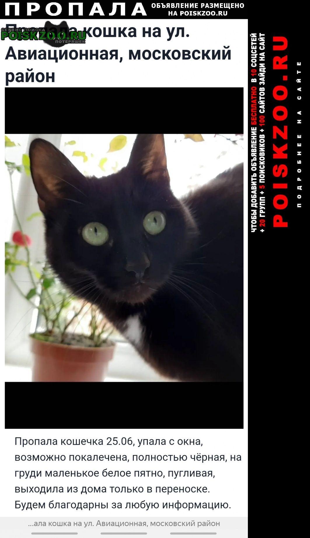Пропала кошка кошечка на ул. авиационная Санкт-Петербург