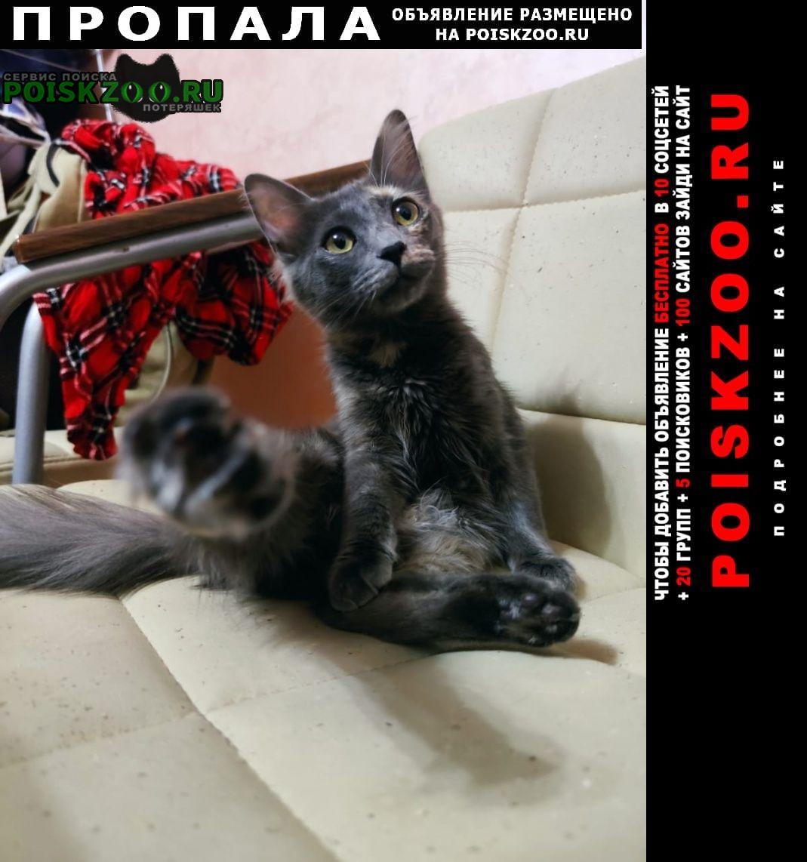 Пропала кошка помогите, пожалуйста, найти. Москва