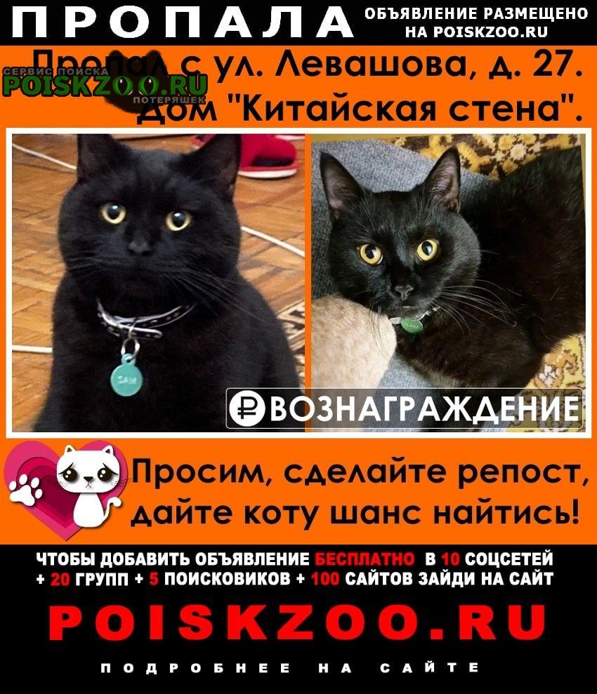 Пропал кот Раменское
