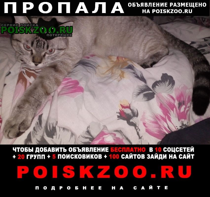 Пропала кошка в посёлке Бакшеево
