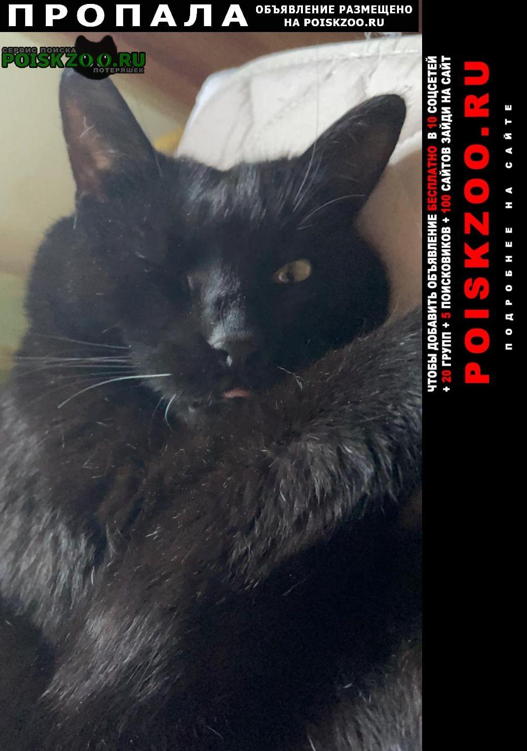 Пропал кот в поселке кратово 30 июня Жуковский