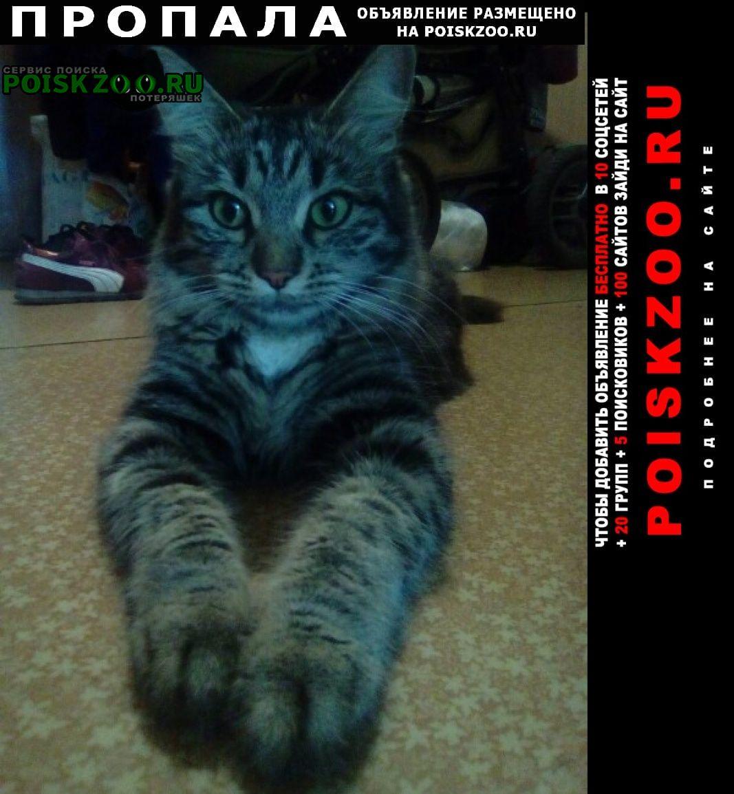 Пропала кошка 30 июня республиканская ул Нижний Новгород