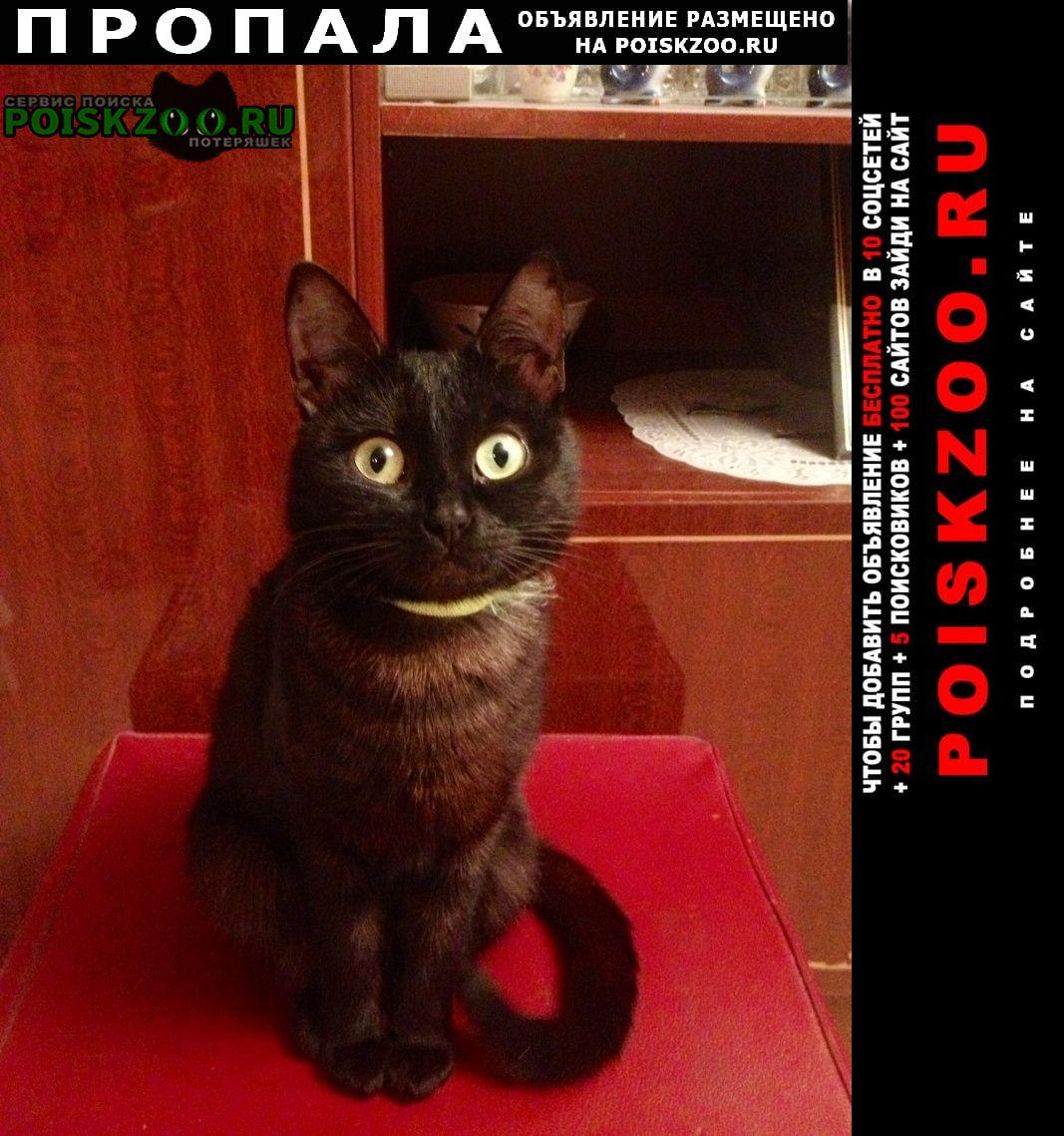 Пропала кошка найдись, очень ждём Домодедово