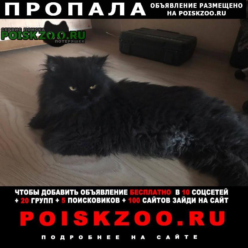 Пропал кот Коломна