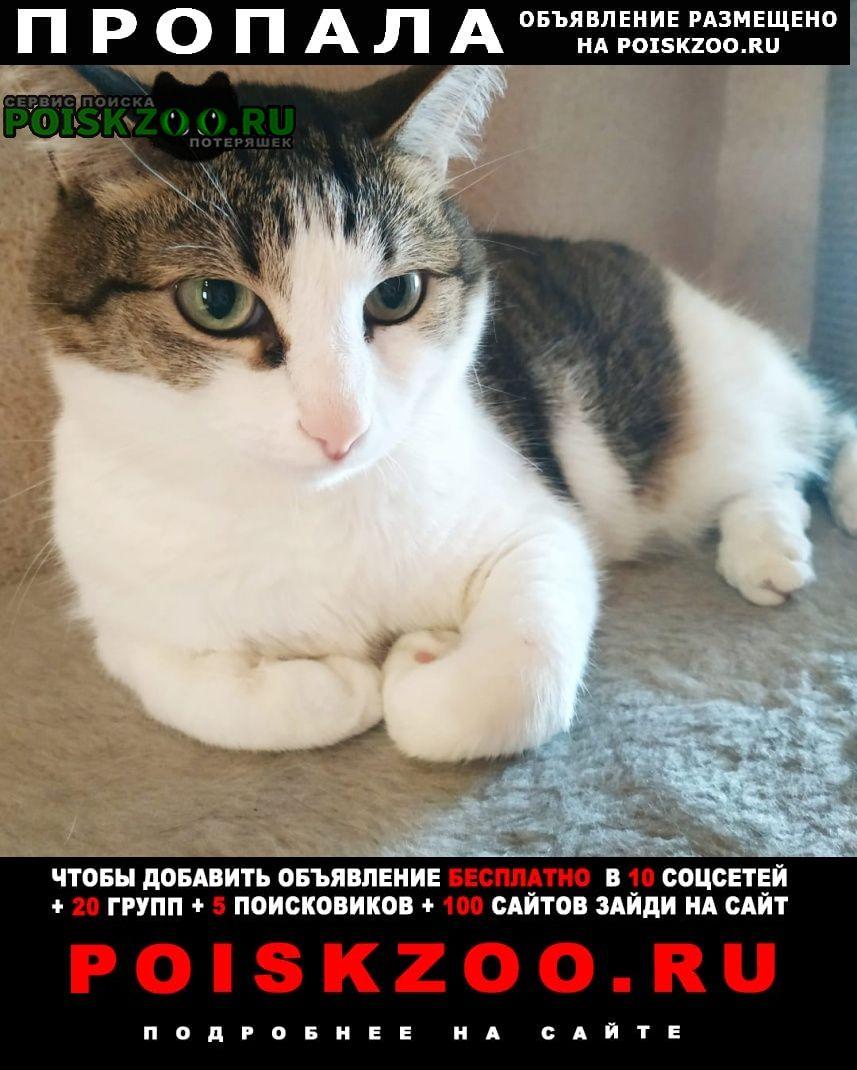 Пропала кошка потерялась. Екатеринбург