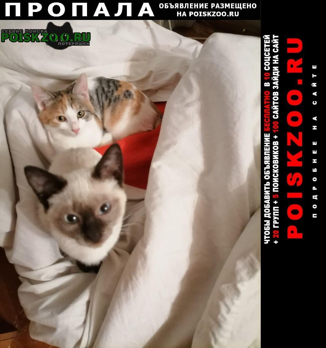 Пропала кошка фрося Елабуга