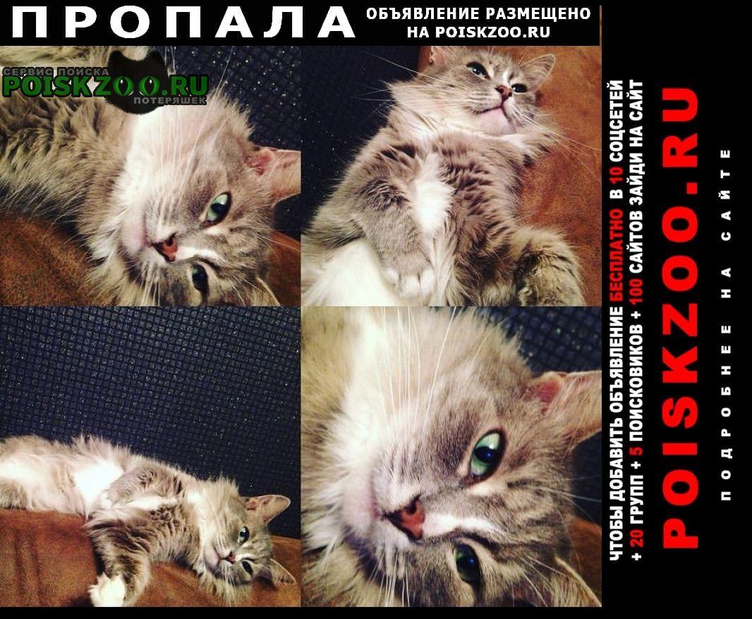 Пропала кошка серая Ногинск