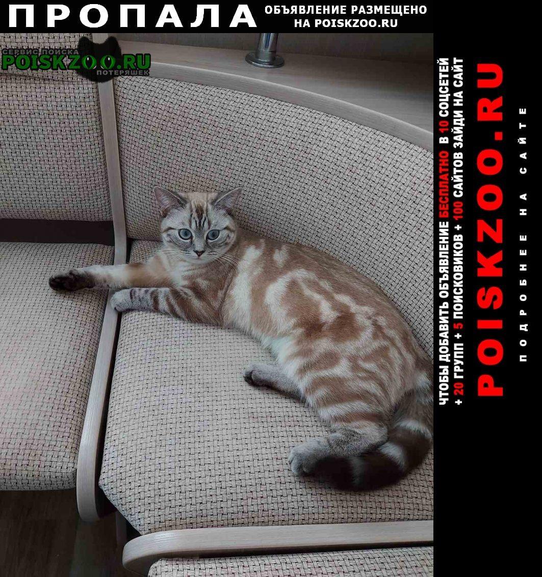 Пропала кошка Ульяновск