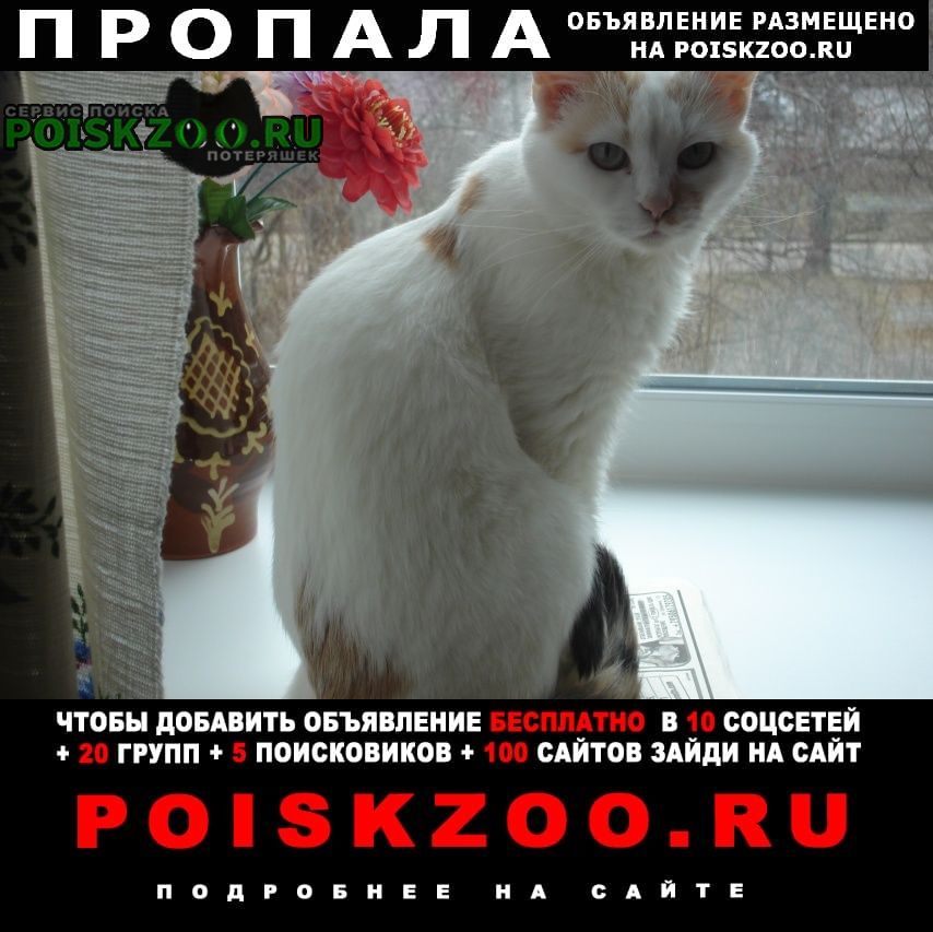 Пропала кошка Саров (Нижегородская обл.)