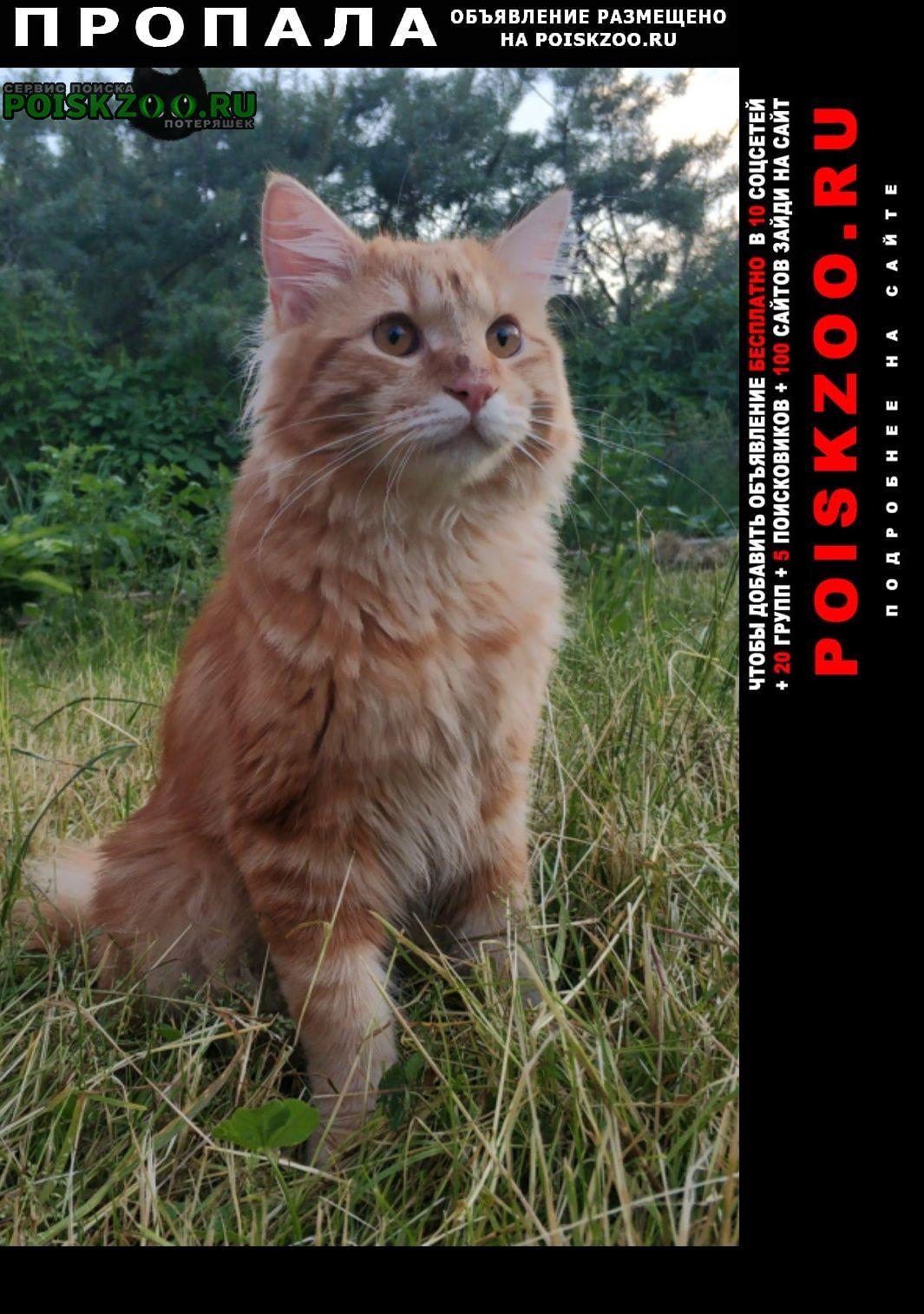 Пропал кот рыжий Москва