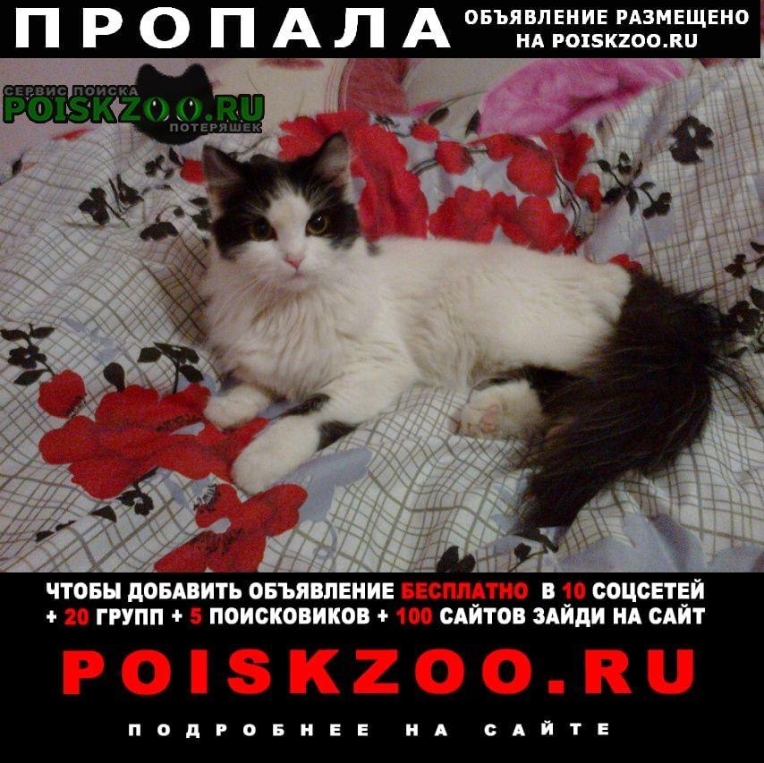 Пропала кошка кошечка Новокузнецк