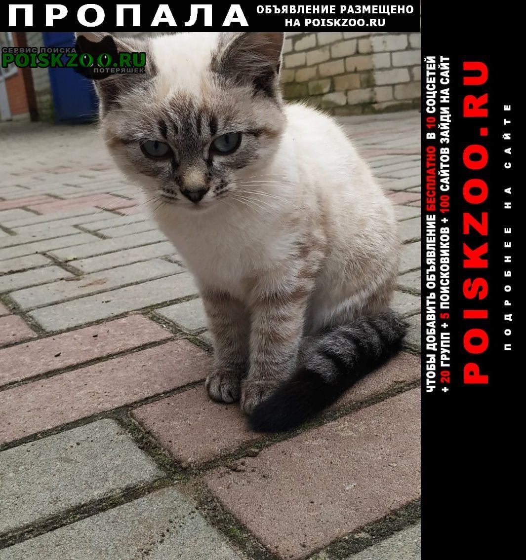 Пропала кошка Клинцы