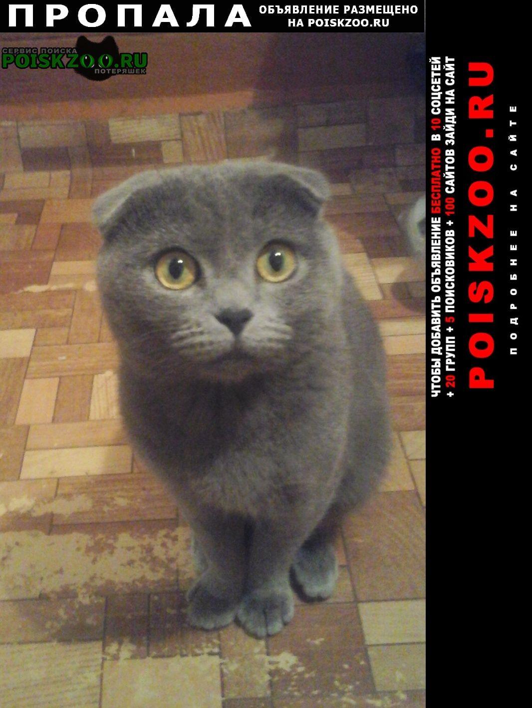 Пропал кот Бежецк
