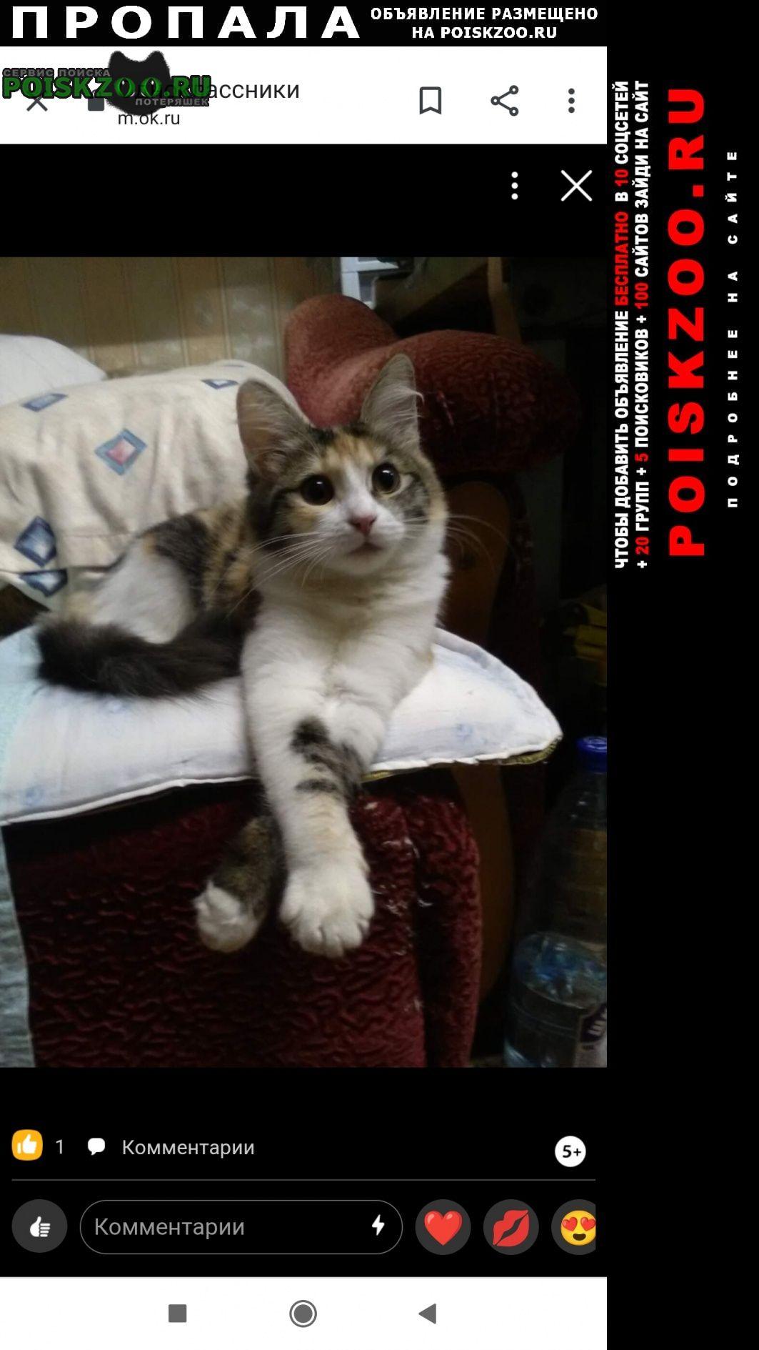 Пропала кошка трехшерстная Иваново