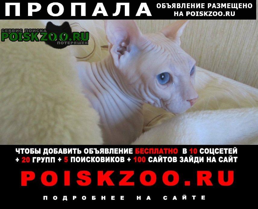 Пропала кошка Бежецк