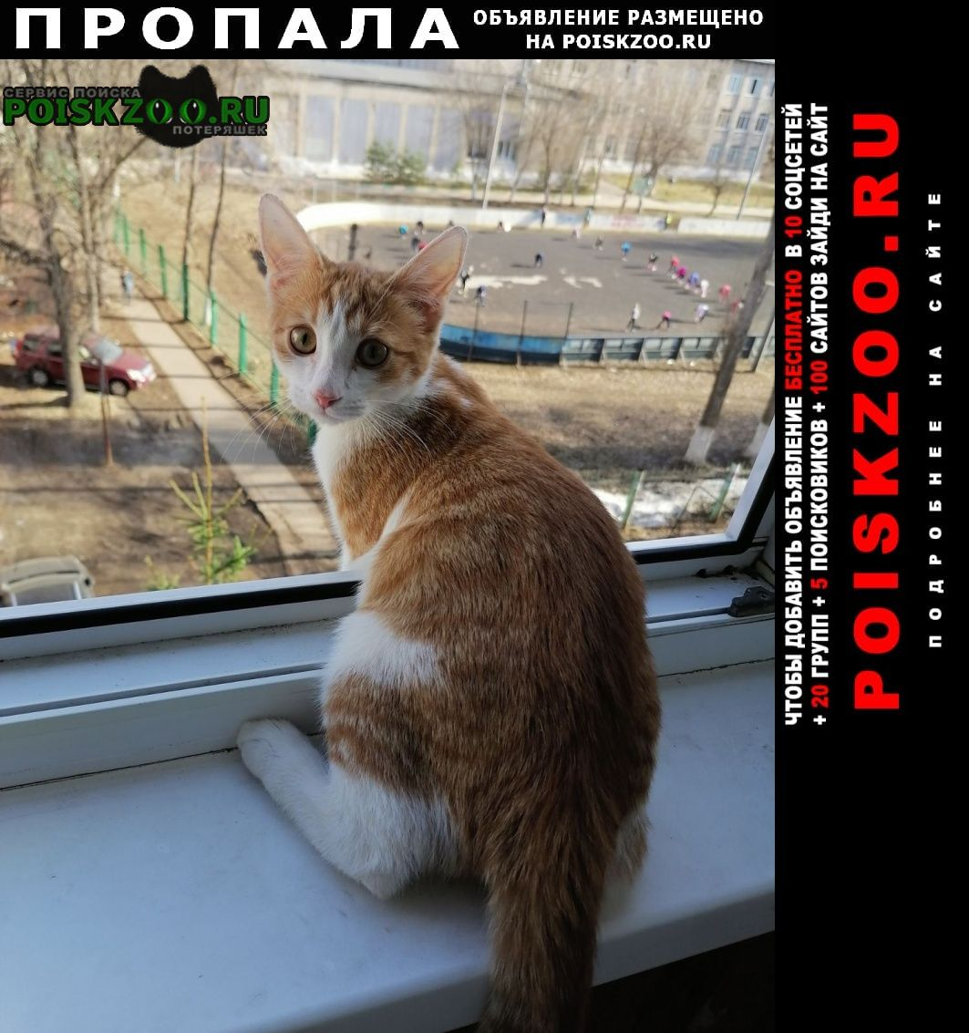Пропал кот Нижний Новгород