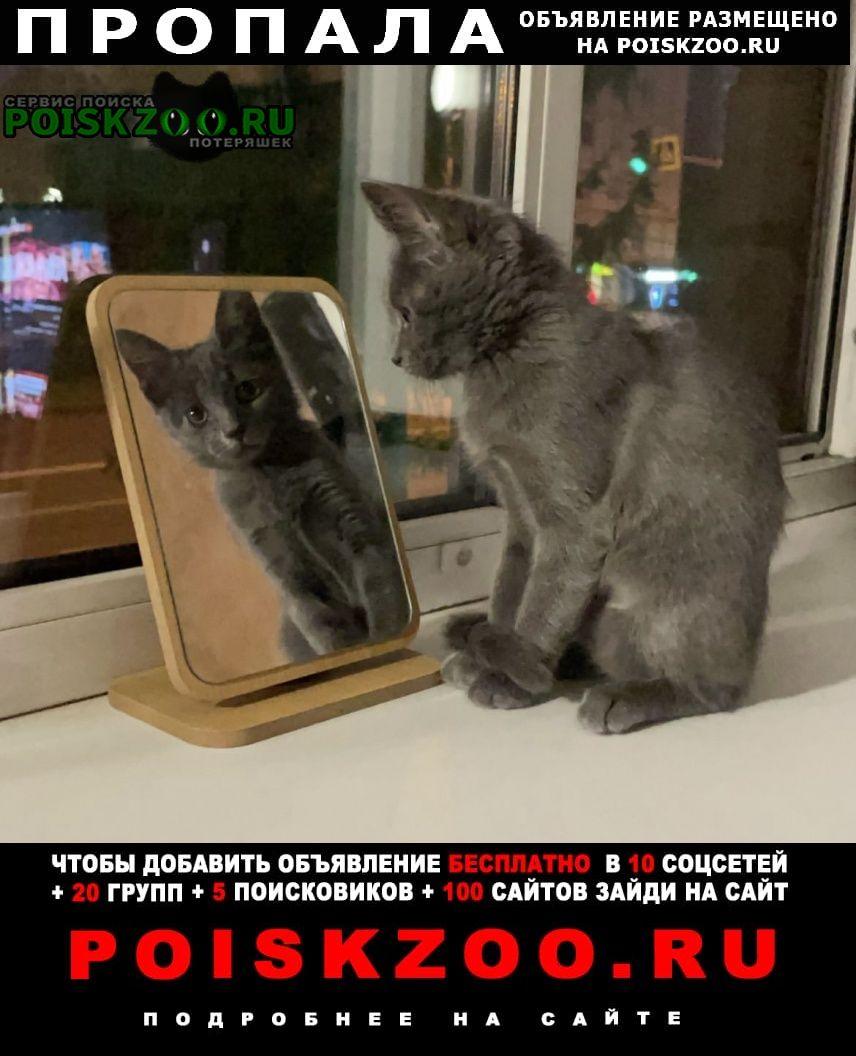 Пропала кошка котенок бусинка Москва