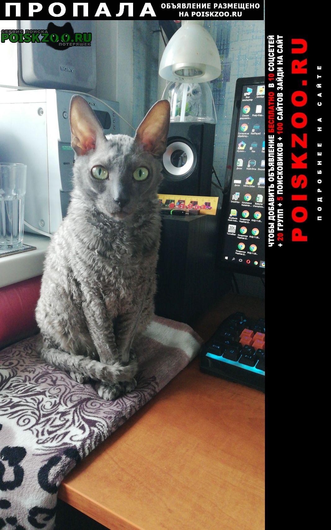 Пропала кошка район басманный Москва