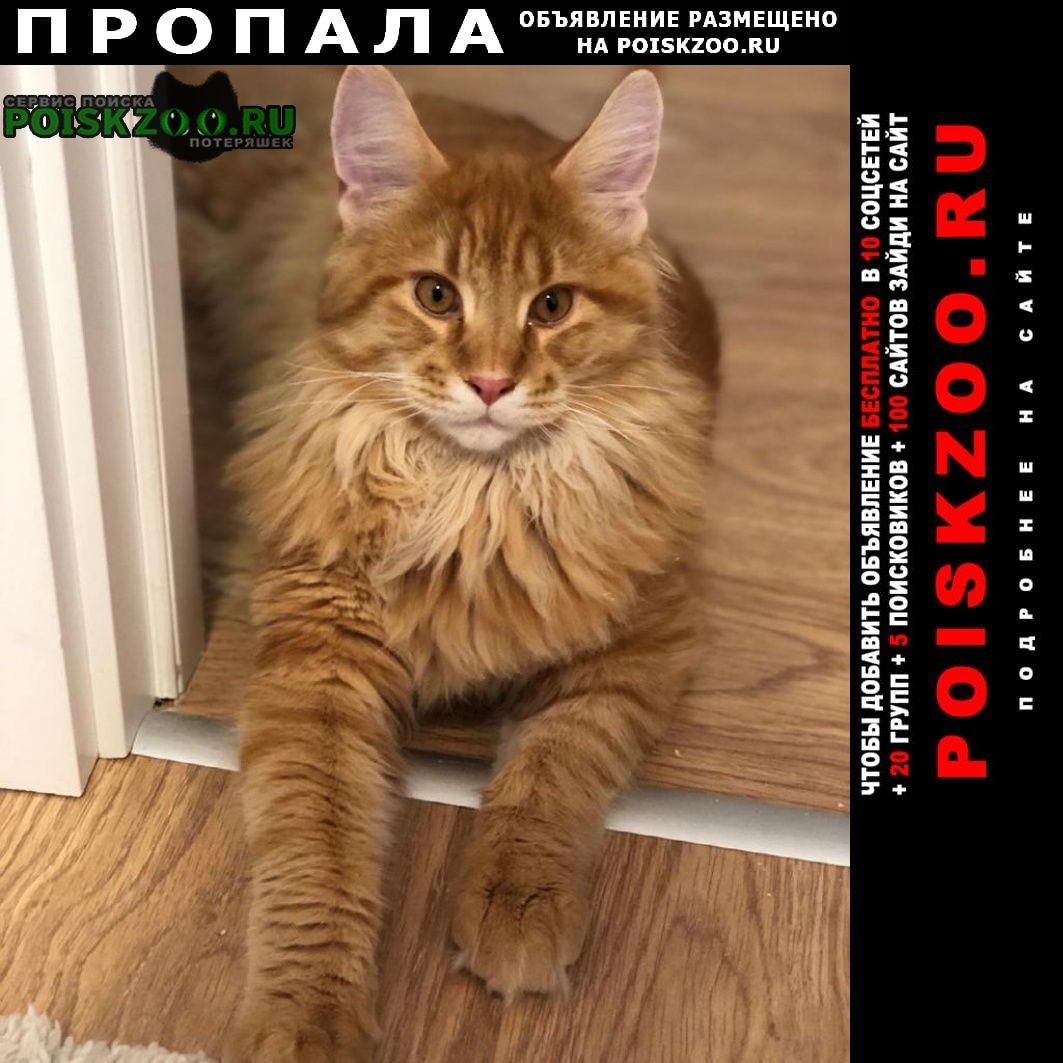 Пропал кот мейн-кун рыжий лёня Москва